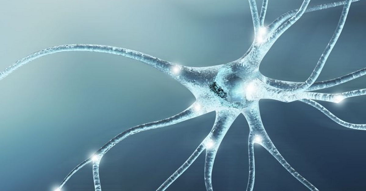 Anxiety: How the Brain is Wired